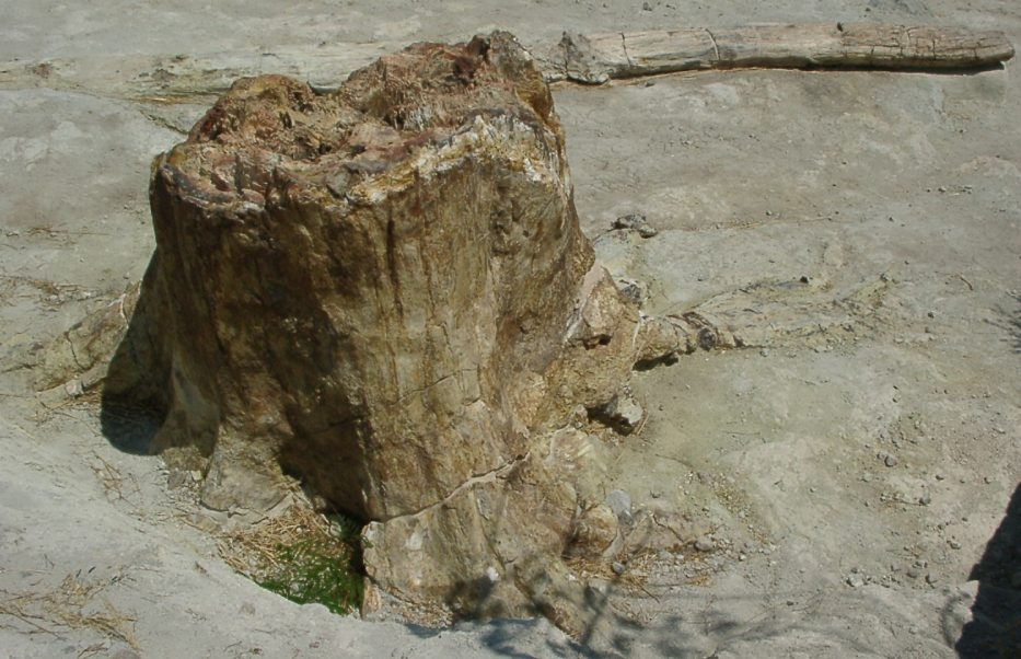 0722petrifiedtree1.jpg